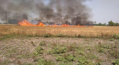 हाईवोल्टेज तार की चिंगारी से 10 बीघा में लगी गेहूं की फसल जलकर राख