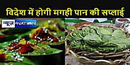Bihar News : बिहार का मगही पान के स्वाद से मुंह लाल करेंगे विदेशी गोरे, निर्यात की तैयारी शुरू