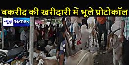 बकरीद पर बिकने के लिए आए एक लाख के मुन्ना और टून्ना बने आकर्षण, खरीदारों में उत्साह का माहौल, लेकिन महामारी को लेकर सावधानी नहीं