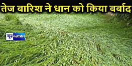 तेज हवा के साथ बारिश ने धान की फसल को किया बर्बाद, किसानों ने की मुआवजे की मांग