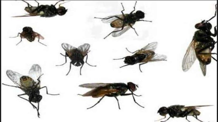 मक्खियों के आतंक से दहशत में बच्चे, स्कूल जाना किया बंद, मानव श्रृंखला बना जताया विरोध