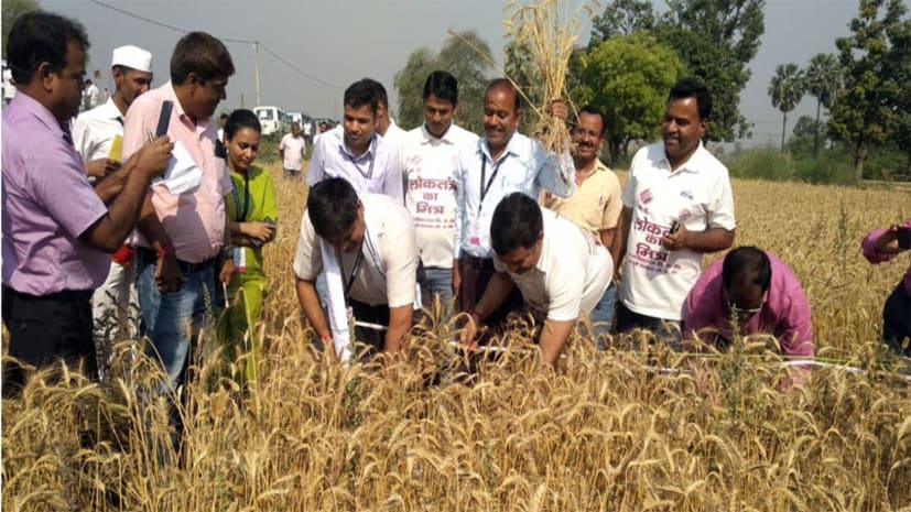 मोतिहारी डीएम ने किसानों के साथ मिलकर काटी गेहूं की फसल, मतदाताओं से कहा-जरुर डाले अपना वोट