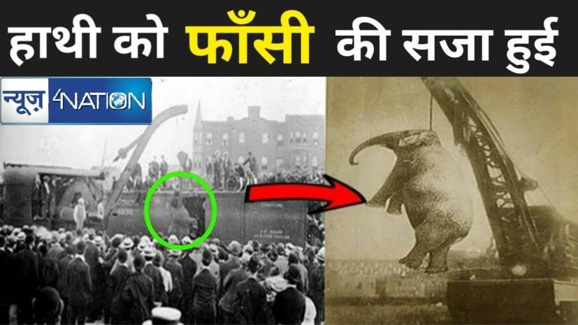 इस जगह दी गई थी हाथी को फांसी, वजह जानकर रह जाएंगे दंग