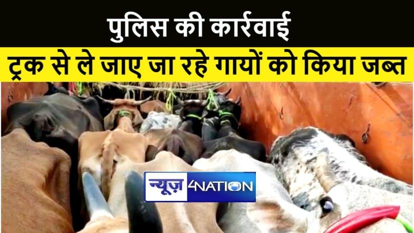 नवादा में पुलिस को मिली सफलता, ट्रक से ले जाए जा रहे सैकड़ों गायों को किया जब्त