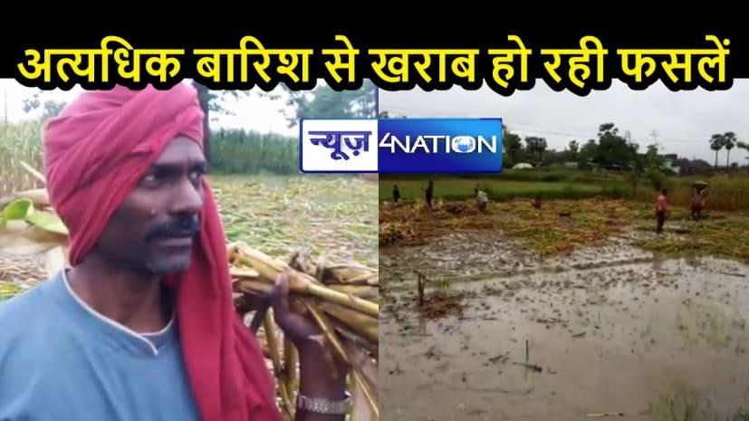 BIHAR NEWS: बारिश से मकई की फसल को बड़ा नुकसान, मॉनसून के समय से पूर्व दस्तक देने से किसानों की बढ़ी चिंता