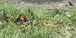 वैशाली में कोरोना पॉजिटिव के शव को नोच रहे हैं कुत्ते, प्रशासन पर लाश फेंक फरार होने का आरोप