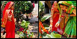 कोरोना पर आस्था पड़ा भारी, बाहर जाने के वजाए घर में ही बड़ का पेड़ लगा सुहागिनों ने की बट सावित्री पूजा