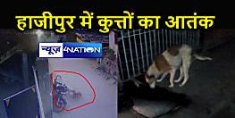 आतंकी बन चुके हैं हाजीपुर के कुत्ते, दो दर्जन लोगों को बना चुके हैं शिकार