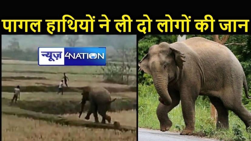 नवादा पहुंचे गया के पागल हाथी, शौच के लिए खेत गए शिक्षक सहित दो लोगों को कूचल कर मार डाला