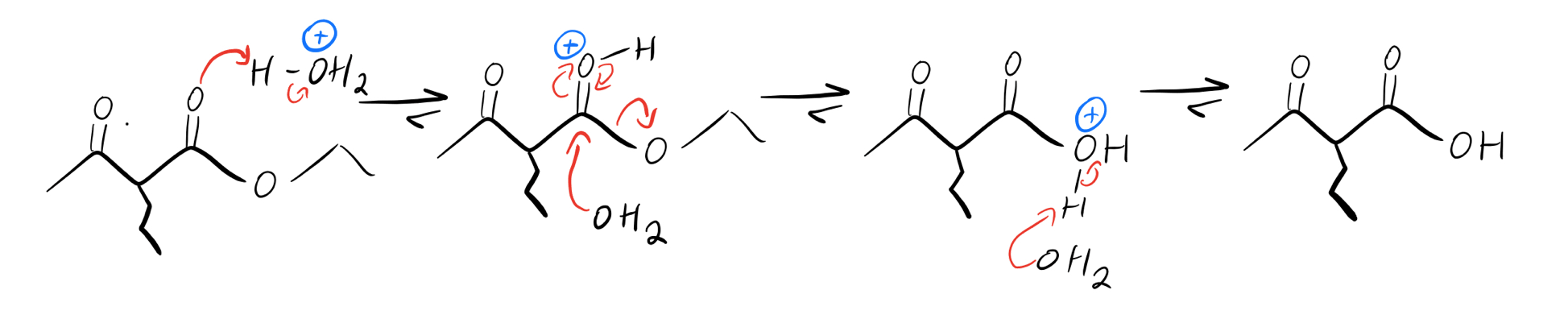 Acid-catalyzed-ester-hydrolysis