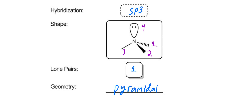 Trimethylamine hybridization and geometry answer
