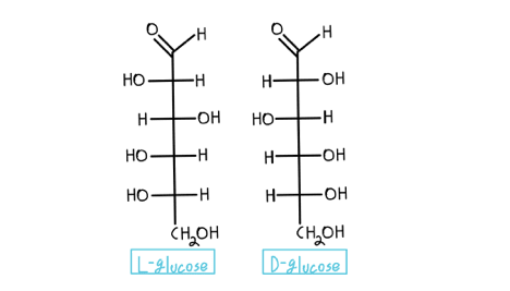 Fischer projections of glucose