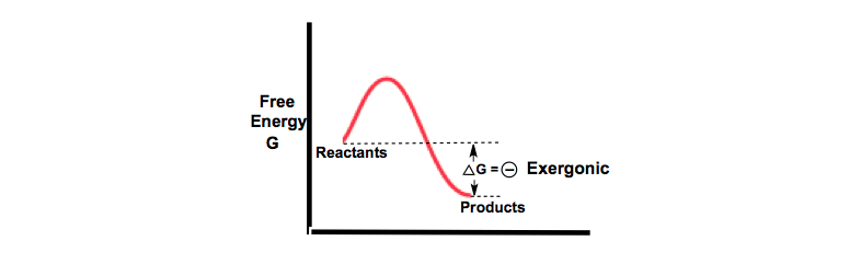 Exergonic-Reaction-Equation-system-irreversible