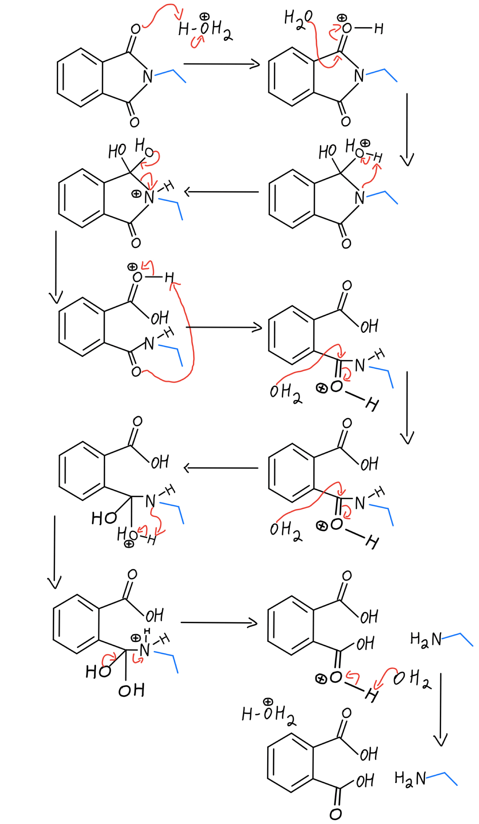 Acidic hydrolysis mechanism