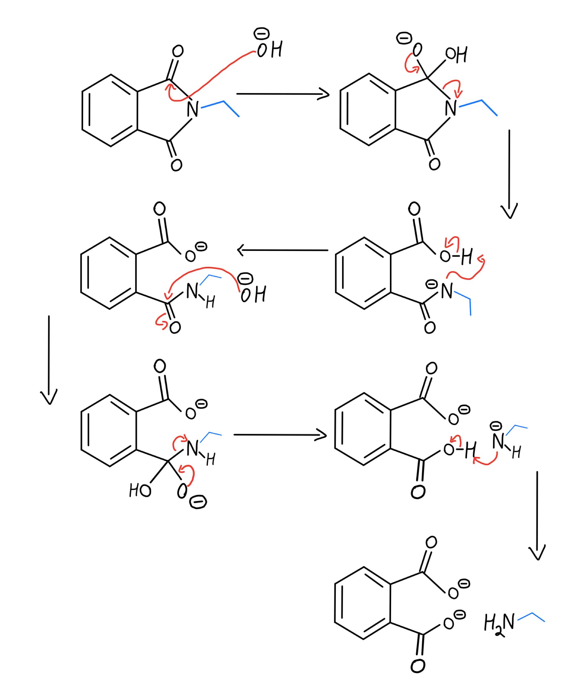 Basic hydrolysis mechanism