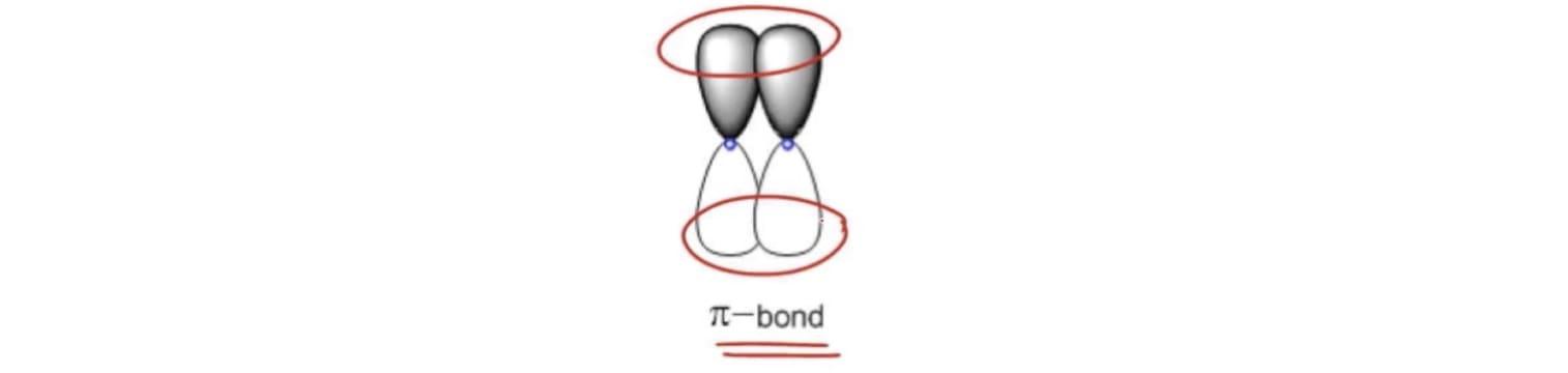 P Orbital Model