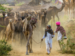 Road trip to Rajasthan - 2017 | Would you be joining?