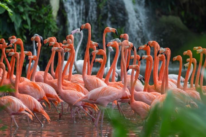 Flamingo sightings in Mumbai