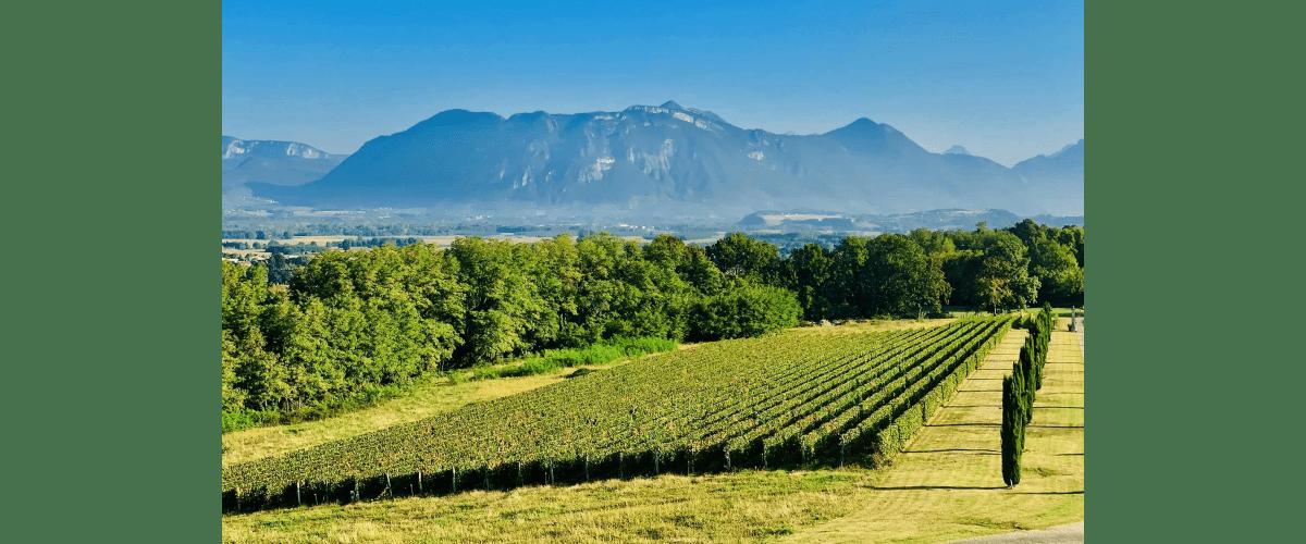 Vignes Château Chevalier Bayard