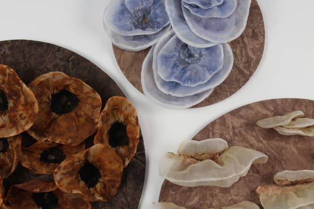 Fungi Series