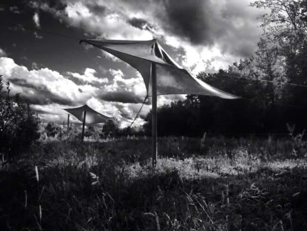 Fabricated Landscape: Tensile Form in Horticultural Space