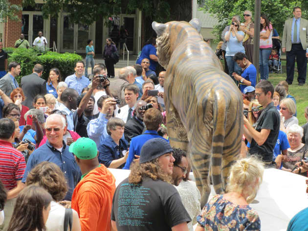 Tom the University of Memphis Tiger