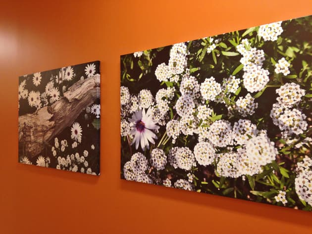 Kaiser Permanente Photography Installation