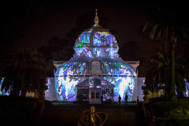 Photosynthesis at the Conservatory of Flowers