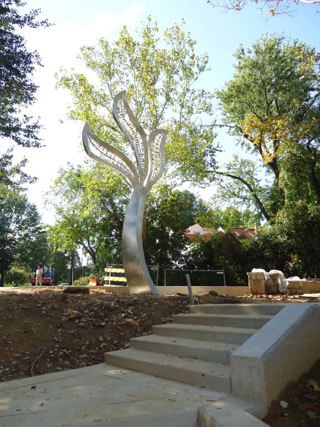 The Takoma Trees