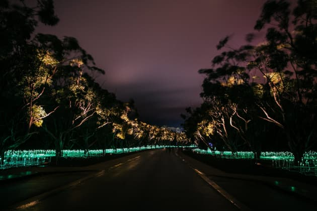Field of Light: Avenue of Honour, Albany