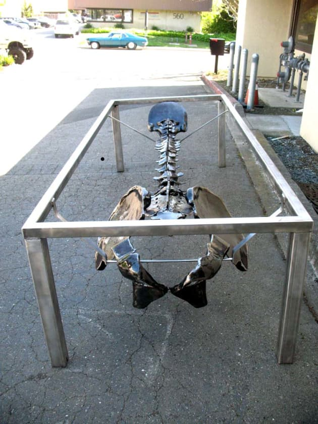 Human Spine conference Table