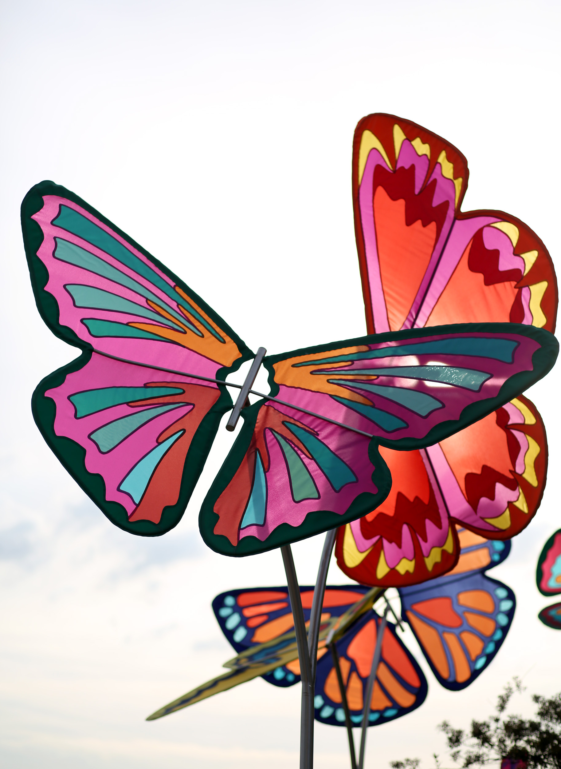 Butterflies at White River Gardens - CODAworx