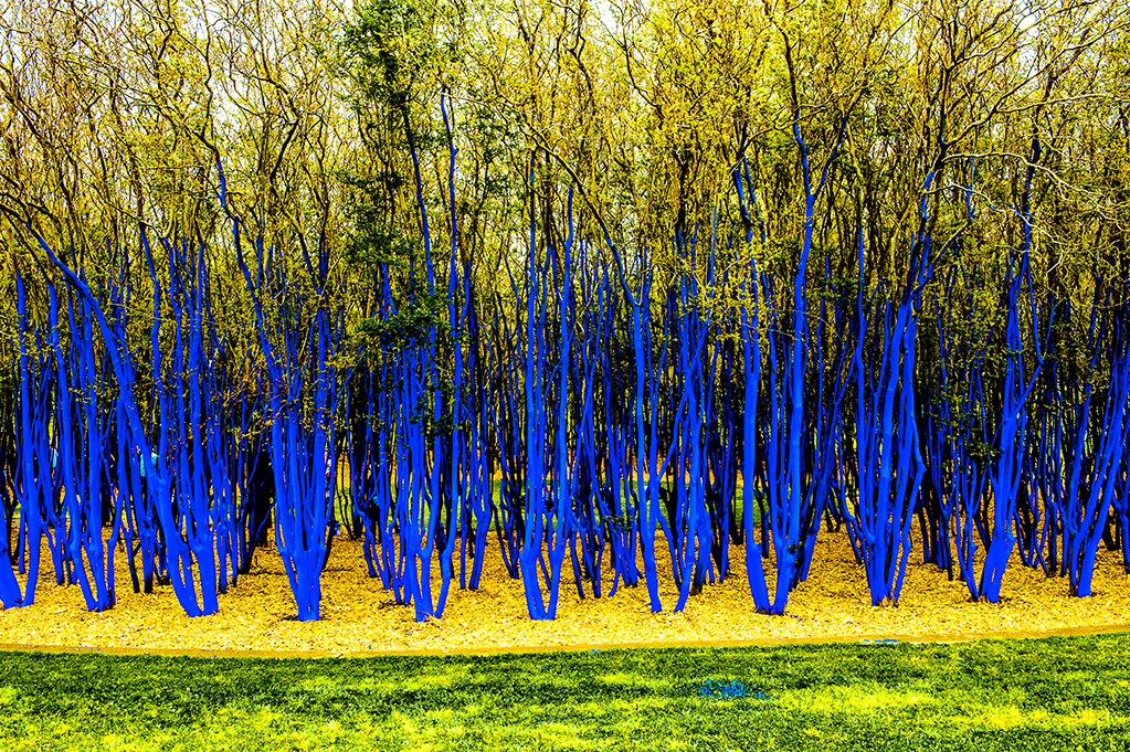 Project the blue trees codaworx