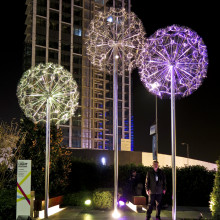 Dandelions Istanbul