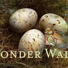 Wonder Walk VR App for the Childrens Hospital  at Montefiore