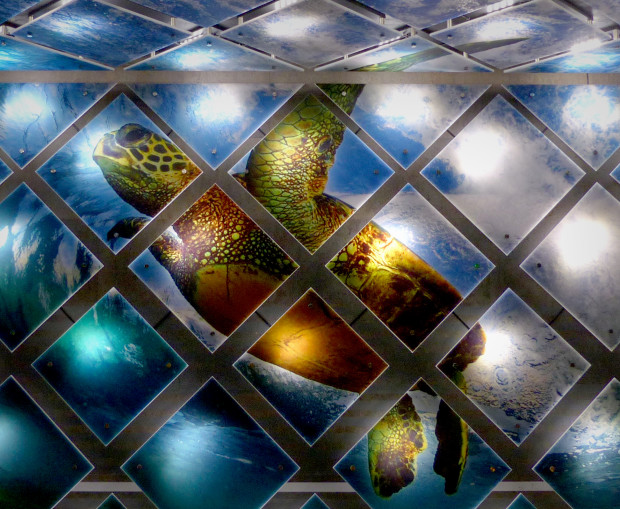 CODAmagazine: Transformative Walls cover image