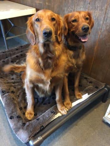 Dog Of The Month Contest Kuranda Dog Beds