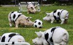 サッカー、フットサル大好き!