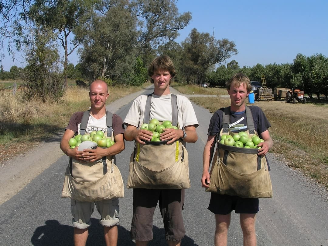 Three backpackers on the Australian fruit picking trail