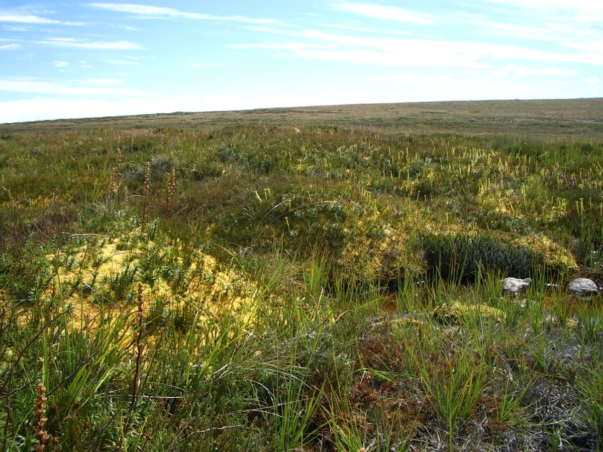 Alpine Sphagnum Bogs and Associated Fens ecological community. Endangered, occurring in alpine areas across NSW, ACT, Vic and Tas.