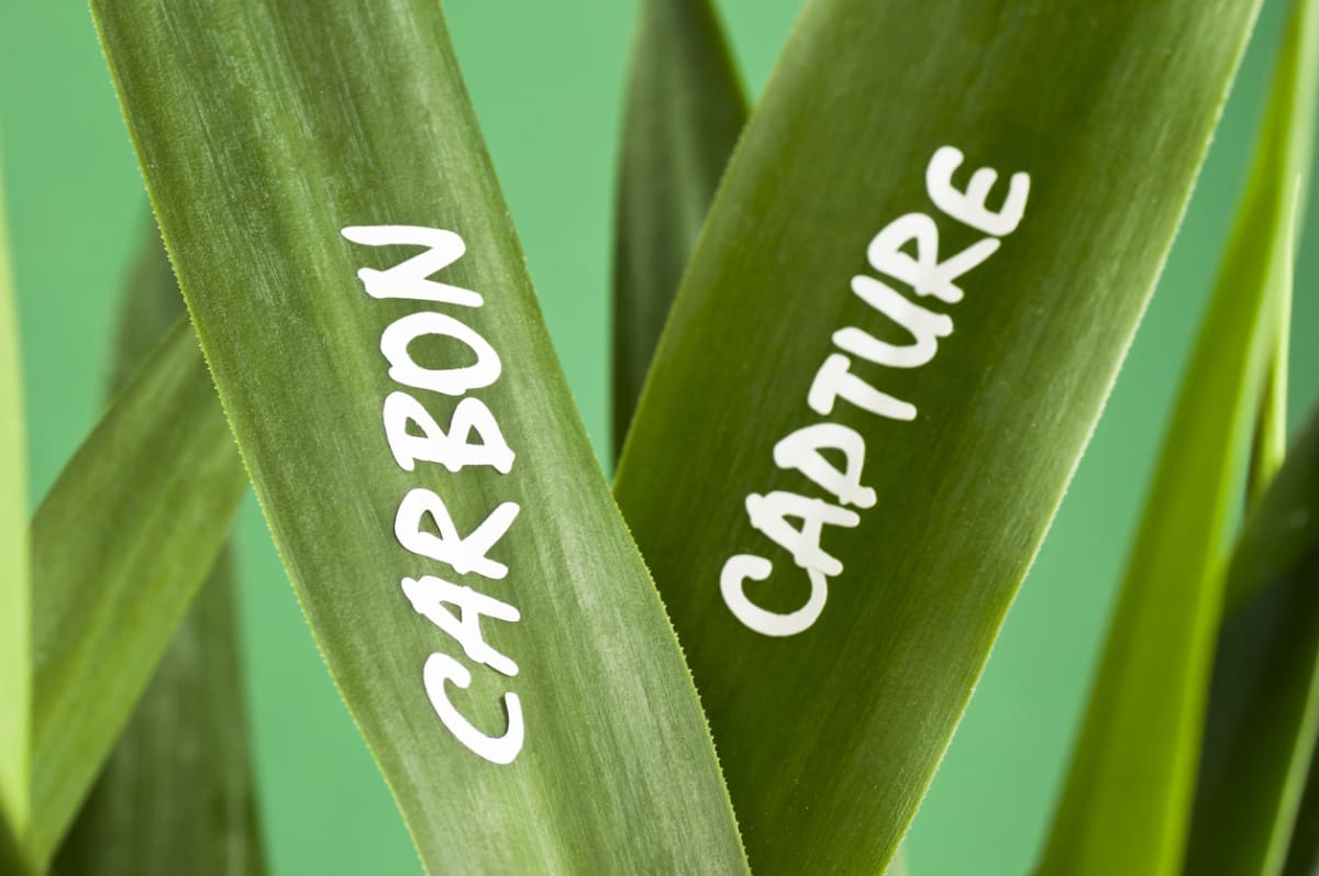 Close-up of plant leaves with the words