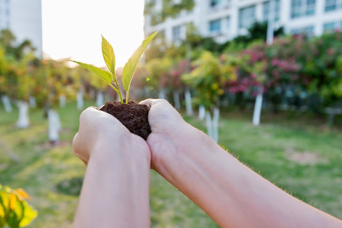 Woman's hands holding a tree seedling with trees and buildings in the background