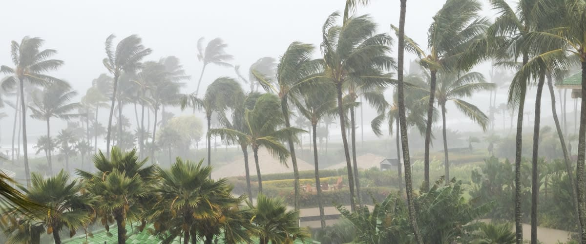 A storm whipping plam trees on a tropical island.