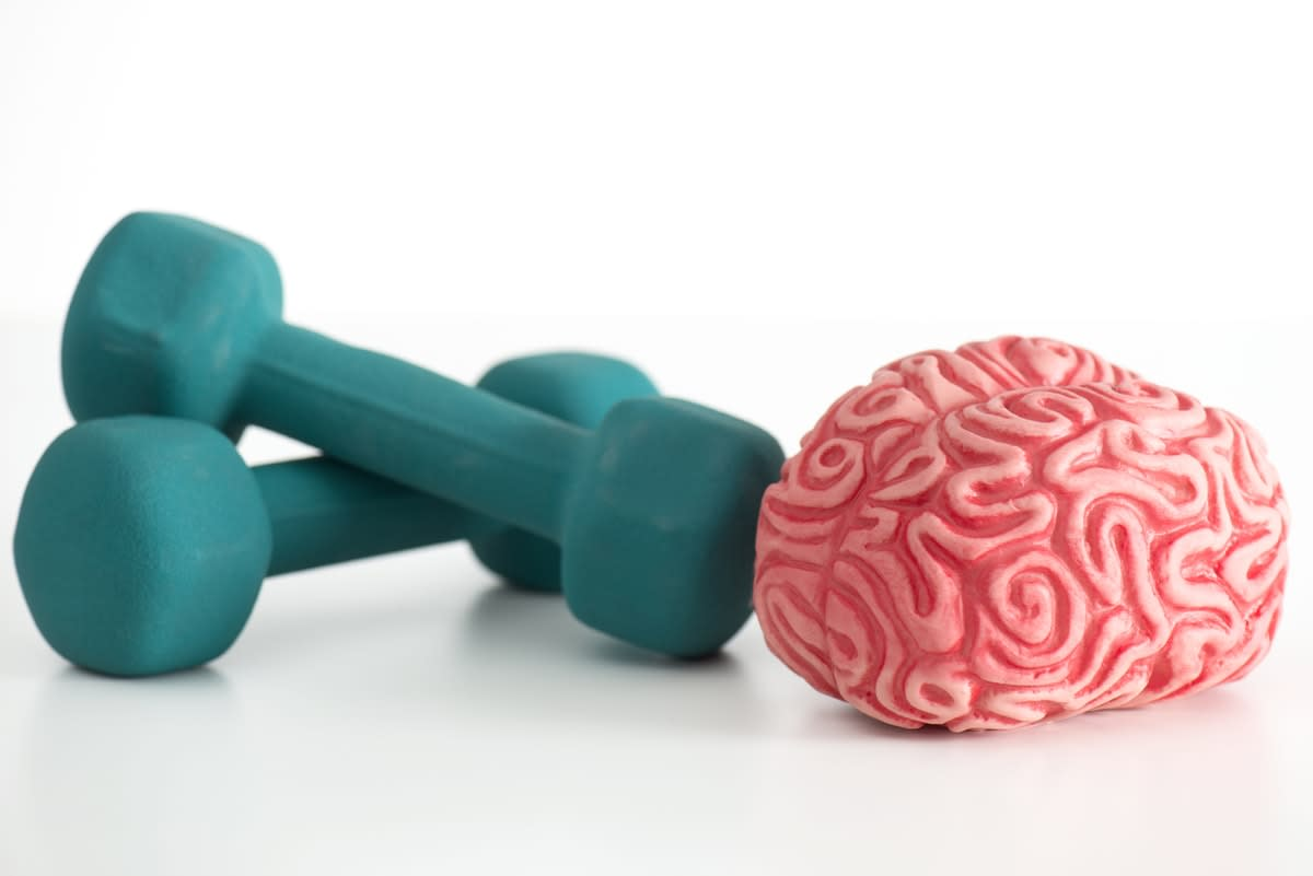 A plstic brain beside two barbell hand weights