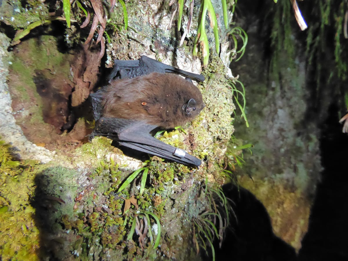 Threatened Bats Found Near Planned Wind Farm