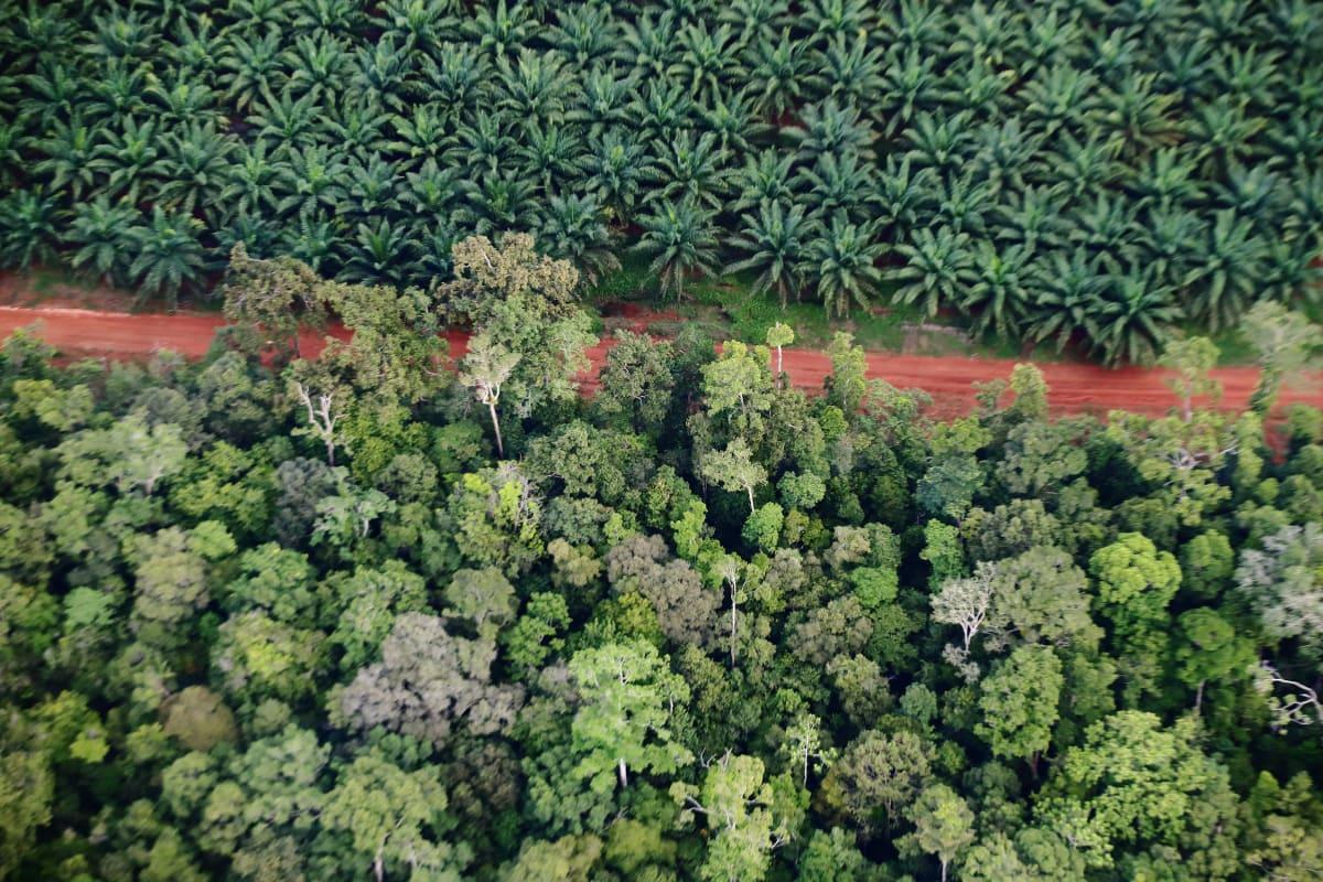 Tanah Merah project in Papua