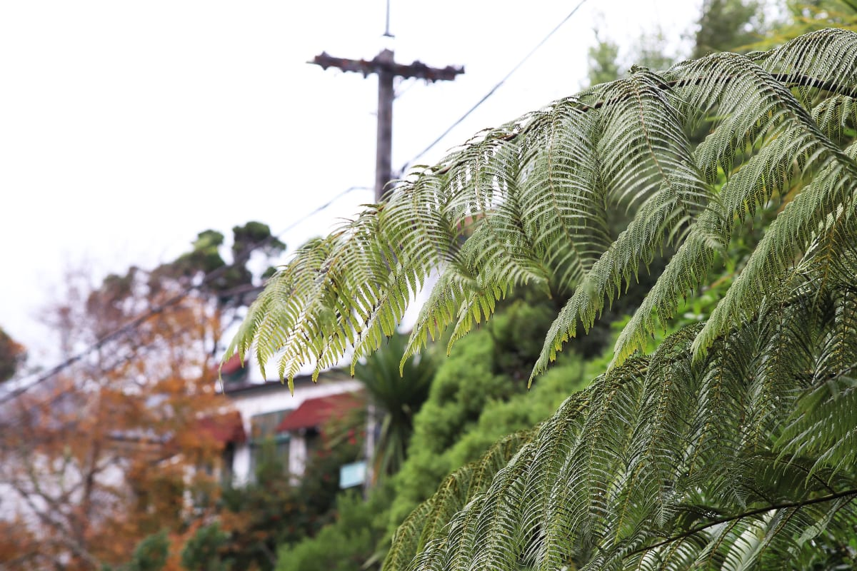 Why Urban Trees Are Worth Fighting For