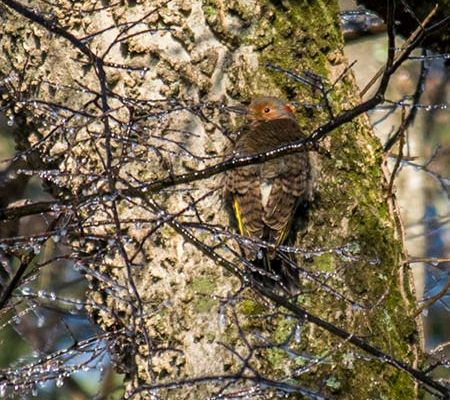 Wildlife Photography, Woodpecker