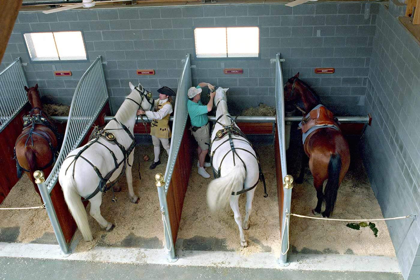 Home Educators Nation Builder Programs: Virginia Light Horse 1776