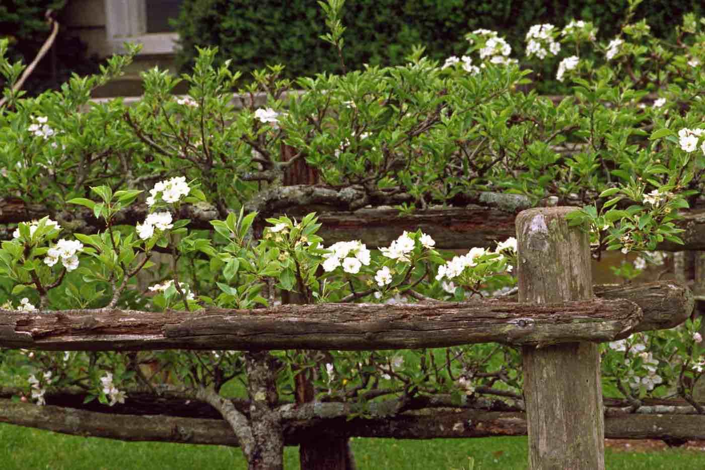 Gardener's Tour